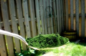 health-benefits-of-chlorella-algae